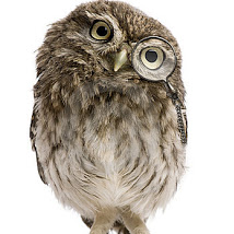 politecuriosityowl
