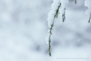 silent_winter_morning_by_passionandthecamera-d5vx4jy